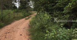 ที่ดิน 9 ไร่ 19 ตารางวา ติดถนนใหญ่ กำลังเจริญ ที่ อ นาดูน จ มหาสารคาม