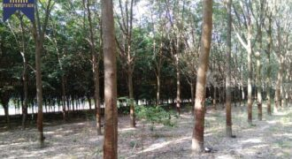 ที่ดิน สวนยาง นิคมพัฒนา ระยอง ที่ตั้ง : ตำบลนิคมพัฒนา อำเภอนิคมพัฒนา จังหวัดระยอง